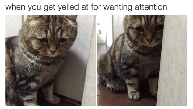 cat funny memes