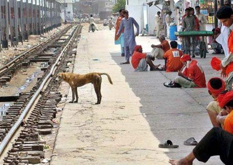 dog sacrificed his own life to save human life