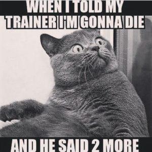 hilarious gym quotes